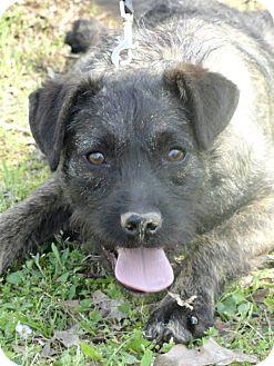 Terrier (Unknown Type, Medium) Mix Dog for adoption in Hartford, Connecticut - Buckley