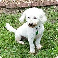 Adopt A Pet :: Pierre - Shawnee Mission, KS