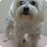 Adopt A Pet :: Daisy - Gary, IN
