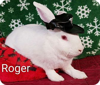 Florida White Mix for adoption in Williston, Florida - Roger