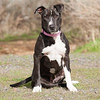 Adopt A Pet :: Rizzo - Washoe Valley, NV