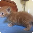 Adopt A Pet :: Vega - West Palm Beach, FL