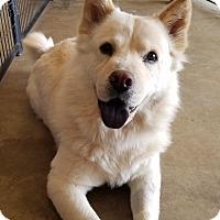 Adopt A Pet :: MAUI - Peoria, AZ