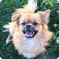Adopt A Pet :: Jesse - Irvine, CA