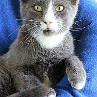 Adopt A Pet :: Peter - Waggaman, LA