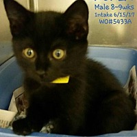 Adopt A Pet :: Kukla - Fayetteville, WV