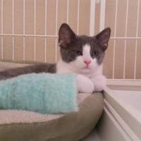 Adopt A Pet :: Eliza - Waupun, WI
