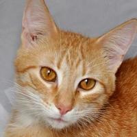Adopt A Pet :: Lionel - Tilton, IL
