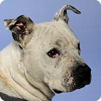 Adopt A Pet :: Roman - Crossville, TN