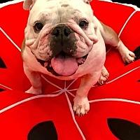 Adopt A Pet :: Summer - Odessa, FL