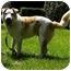 Photo 4 - Jack Russell Terrier/Australian Cattle Dog Mix Dog for adoption in Bellevue, Nebraska - Red Dog
