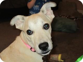 Labrador Retriever Mix Dog for adoption in Richmond, Virginia - Penelope