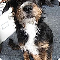 Adopt A Pet :: Floyd - Santa Monica, CA