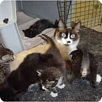 Adopt A Pet :: Kittens and Momma cat - Lake Charles, LA