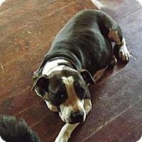 Adopt A Pet :: Tunie - Clinton, ME