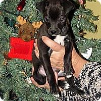 Adopt A Pet :: SPECKLE - Phoenix, AZ