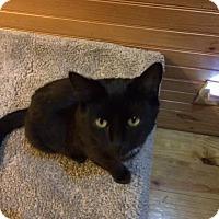 Adopt A Pet :: Zipper - McDonough, GA