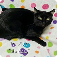 Adopt A Pet :: Shadow - Cannelton, IN