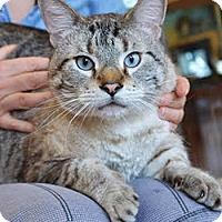 Adopt A Pet :: Marvin - Davis, CA