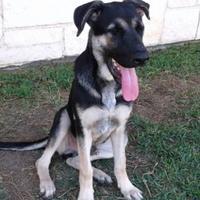 Adopt A Pet :: 35480072 - Mesquite, TX
