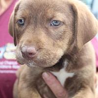 Adopt A Pet :: Ellie - Royal Palm Beach, FL