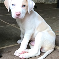 Adopt A Pet :: Skylar - Hagerstown, MD