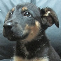 Adopt A Pet :: Captain * ADOPTED * - Trenton, NJ