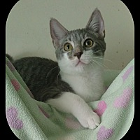 Adopt A Pet :: Whisper - Richmond, VA