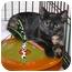 Photo 1 - Domestic Shorthair Kitten for adoption in Stafford, Virginia - Autumn