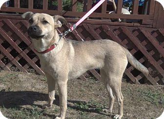 Terrier (Unknown Type, Medium)/Rat Terrier Mix Dog for adoption in Evans, Georgia - Sandy