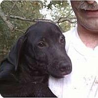 Adopt A Pet :: Bo - Jackson, TN