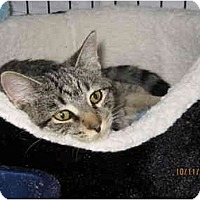Adopt A Pet :: Autumn - Catasauqua, PA