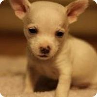 Adopt A Pet :: Dobby - Seattle, WA