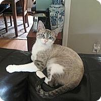 Adopt A Pet :: Gypsy - Acworth, GA