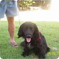 Adopt A Pet :: Monroe - Glastonbury, CT