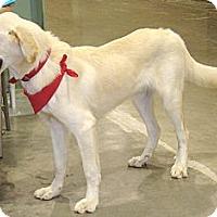 Adopt A Pet :: Tanner - Oklahoma City, OK