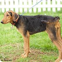 Adopt A Pet :: Maple - Homewood, AL