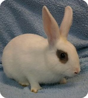 Other/Unknown Mix for adoption in Montclair, California - Fawn