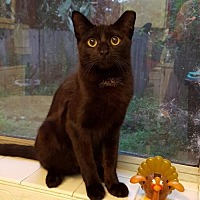 Adopt A Pet :: Kasey - Orlando, FL