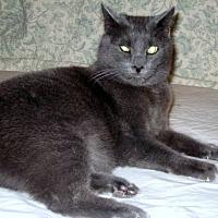Adopt A Pet :: Jasper - Roseville, MN