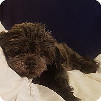 Adopt A Pet :: Lena - Greensboro, NC