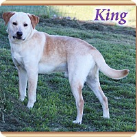 Adopt A Pet :: King - Hillsboro, TX