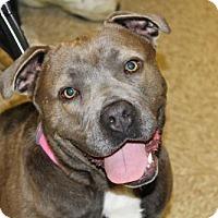 Adopt A Pet :: Gracie - Fort Wayne, IN