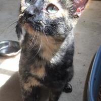 Adopt A Pet :: Maleaka - Bartlesville, OK