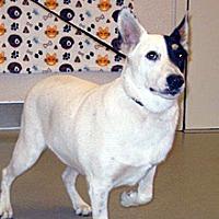 Adopt A Pet :: Dixie - Wildomar, CA