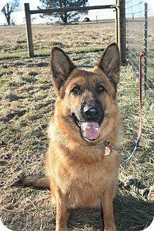 German Shepherd Dog Dog for adoption in Roodhouse, Illinois - Petra
