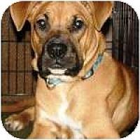 Adopt A Pet :: RUGBY - Gilbert, AZ