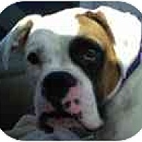 Adopt A Pet :: Gustoff - North Haven, CT