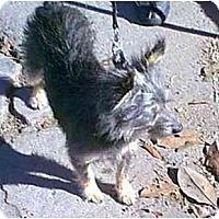 Adopt A Pet :: WINSOR - dewey, AZ
