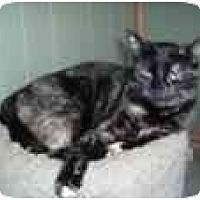 Adopt A Pet :: Gretel - North Boston, NY